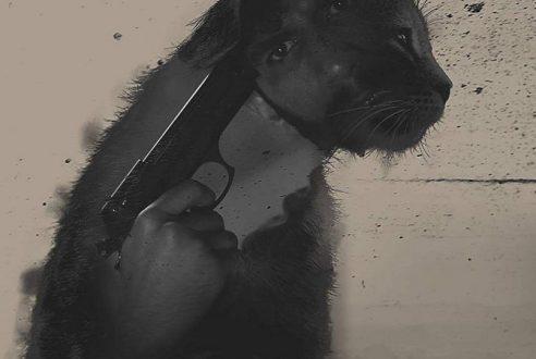 PİSÎKA MIN / MY CAT